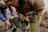 Прививки — необходимая мера в местных условиях, поскольку наличие беспризорных собак в каждом чукотском поселке не может гарантировать безопасность для владельца упряжки.