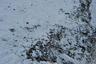 В чукотских селах диких собак время от времени отстреливают сами же охотники.