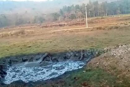 Увязшего слоненка вытащили из трясины экскаватором