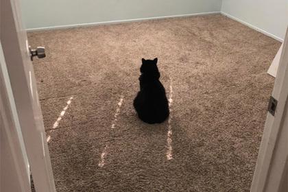Горюющая посреди пустой комнаты кошка растрогала пользователей сети