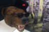 Парни из Сибири основали марку оправ из натурального дерева Brevno (с уточняющей подписью Siberian Wood) и выбрали ее символом, разумеется, русского бурого медведя. Оправы сделаны нарочито грубо — где с трещинами, где с опалинами: это, по замыслу дизайнеров, подчеркивает уникальность ручной работы.