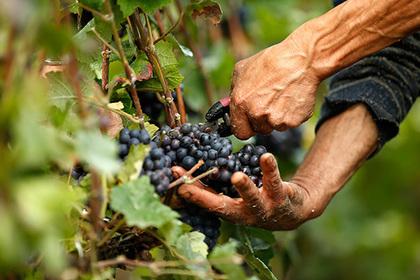Французов обманом массово напоили плохим вином