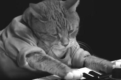 Умер ставший международным мемом кот-пианист