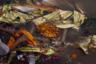 После десятков кремаций поверхность священной Ганги около гхата напоминает свалку.