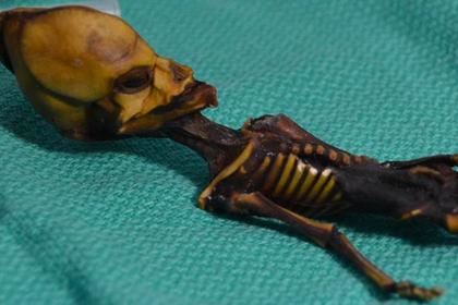 Раскрыта тайна «инопланетного» гуманоида из Атакамы