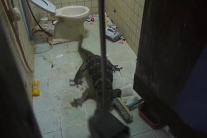 Полутораметровый варан отвлек тайца от медитации и разгромил его туалет