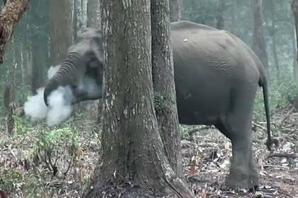 Ученые объяснили поведение «извергающей дым» слонихи