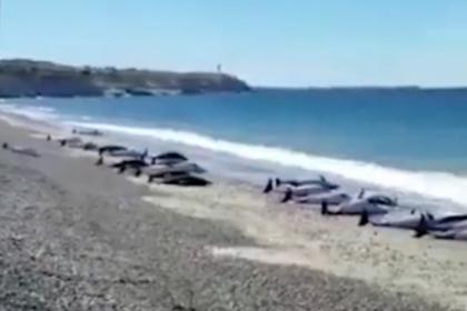 Десятки дельфинов выбросились на берег Аргентины