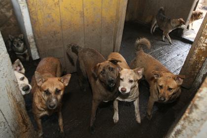 Ветеринар замучил до смерти 170 собак в Новочеркасске