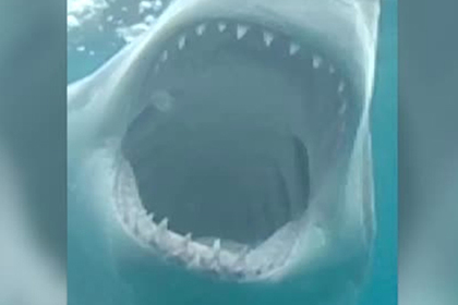 Лишившийся ноги при встрече с акулой фотограф заглянул хищнику в пасть