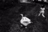 Иранский фотограф Киаранг Алей наблюдал за играми семилетней Зофры. Девочка весело носилась по двору, гоняя возмущенно крякающих уток. «Это был момент настоящего счастья, мне было радостно на нее смотреть»,— написал он.