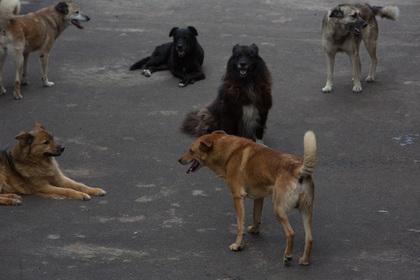 Бездомные собаки помешали приземлиться самолету