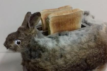 Таксидермист превратил мертвого кролика в тостер