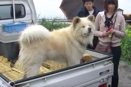 Бездомный пес с нелепой мордой стал начальником вокзала в Японии
