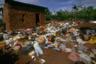 Мертвых тутси не позволяли хоронить. Хуту оставляли их тела прямо на месте убийств, и в итоге ими питались крысы или бродячие псы. Множество трупов также сбрасывали в реки, озера и ручьи, чтобы «отправить обратно в Эфиопию».