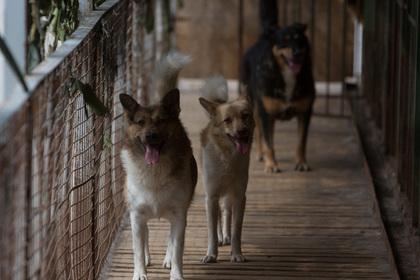 Более 20 изуродованных трупов собак нашли в Комсомольске-на-Амуре