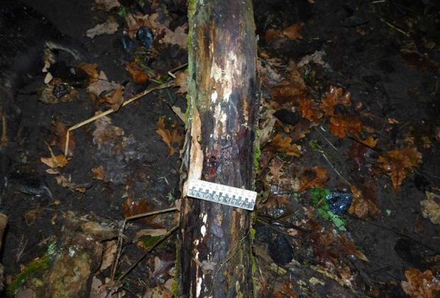 След выстрела, обнаруженный на месте преступления