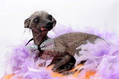 Самая неприглядная  собачка  Англии  стала моделью