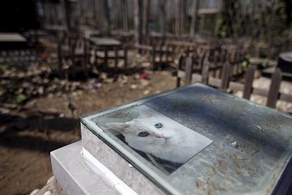 Японка хоронила кота и умерла