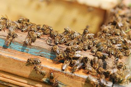 Пчелы сорвали рейс в Крым