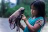 В тропическом лесу Амазонки живет община кихва сарайяку. Ее члены свято верят в то, что каждый элемент лесной экосистемы — животные, растения, реки, природные явления  — наделены живым духом. Если повредить одну из составных частей, могут пострадать все джунгли. Вот почему кихва стараются не брать от джунглей ничего лишнего, только то, что поможет им прокормиться и защититься. Фотограф Миша Вальехо влился в ряды сарайяку и показал, чем живут современные представители этого немногочисленного народа.
