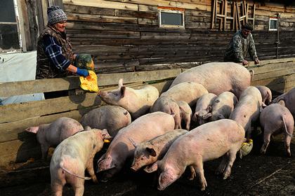 Корпорация МСП представила комплексный продукт поддержки фермеров