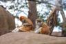 Лейпцигский зоопарк— самый красивый и большой в Европе. Здесь находятся крупнейший в мире павильон обезьян «Понголанд», львиная саванна «Макази-Симба», сибирская «Тигровая тайга» и павильон слонов «Ганеша Мандир».