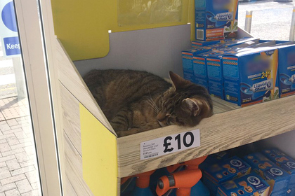 Популярный кот улегся на полку в супермаркете и произвел фурор