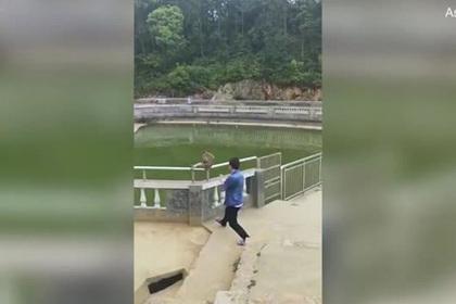 Китаец столкнул обезьяну в воду и пожалел об этом