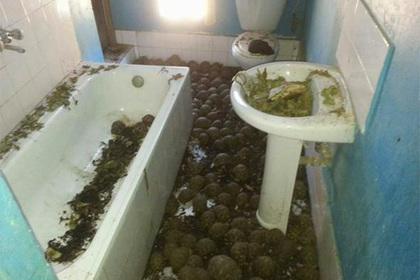 Тысячи плененных черепах нашли по «ошеломляющему зловонию»
