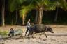 В ближайшие пару лет, скорее всего, Палаван станет братом-близнецом знаменитых Боракая и Себу, но пока он еще сохраняет свою самобытность. Здесь можно найти уединенные пляжи, а местные жители пока не избалованны туристами.