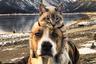 Обычно собаки плохо ладят с котами, но Генри и Балу из Денвера — исключение. Трехлетний пес, который не выносит одиночества, и брошенный матерью котенок мгновенно подружились. «Балу однозначно считает, что Генри — его мама, и повторяет все, что делает собака», — рассказывает их хозяйка.