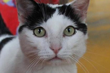 Одинокая пенсионерка завещала полтора миллиона евро коту