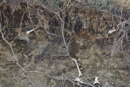 Сотню человеческих костей нашли в Нью-Йорке