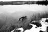 Наступил ноябрь — предзимье. Снег лежит на траве очерченными островками. На озере встает лед. По прозрачной глади первого льда идет рыбак, словно Спаситель по воде.    В доме отца Аркадия нет. «Крестины», — коротко кивает в сторону храма живущий у священника мужичок Сергей. Немного блаженный, очень набожный, он помогает по хозяйству и присматривает за живностью.  В деревянном храме темно, пусто и тихо. Едва слышно, как батюшка читает Евангелие в крошечном приделе Михаила Архангела.   Работает калорифер, совсем не холодно. Двухнедельного малыша погружают в купель. «Беспокойный что-то, может сглазил кто, решили вот окрестить поскорее»,  — шепчет на ухо бабушка младенца.  Родственники новокрещенного зовут батюшку на чай и блины. Аркадий отнекивается: мол, некогда. Спускается к озеру, зачерпывает ведро воды. Идет к дому. Ветер: фалды батюшкиного пальто мечутся в разные стороны. Вдруг его догоняют на «шестерке» и вручают пакетик с блинами. Он смущенно благодарит и расцеловывается со всеми.   «Отпевал недавно  в Кривцах  — мешок картошки заработал, — думаю пора прейскурант вывешивать, как в столичных храмах, — хохмит Аркадий своей фирменной «скороговоркой».  — Только у нас расценки другие, натуральными продуктами. Все норовят отблагодарить — кто рыбником, картошкой вот, яйцами», — уже и забылось, что отец Аркадий приезжий, — настолько вжился он в Колодозеро, а Колодозеро поселилось в нем самом навеки.   Неприютно, холодно, ветрено в ноябре здесь. Земля заледенела, белье на веревках колышется задубевшими полотнищами. Знакомые женщины идут из соседней заброшенной деревни Дубово. «На пикник ходили, костер жгли, чай пили. Делать-то нечего, все ж собрали, даже клюквы нет. Вот и гуляем, свежим воздухом дышим», — хохочут.   Земля стылая, голая почти — ждет настоящего большого снега. Озера ждут, когда встанет метровый лед. Не забудешь, как он ухает и проседает где-то далеко на глубине, когда уже конец декабря — начало января. Если  в этот момент стоять посреди озера — сердце убег
