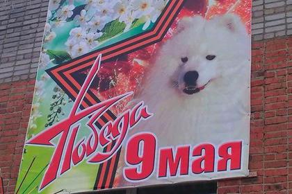 Россиянин развесил по поселку портреты своей собаки к 9 мая и улетел в Данию