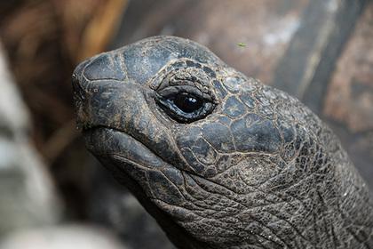 Бывалая черепаха проникла на режимный объект таможни и попалась оперативникам