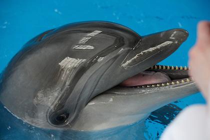 Украинские боевые дельфины предпочли смерть «российской оккупации»