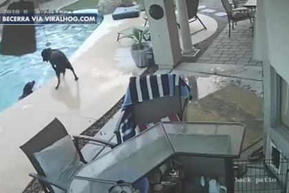 Пес бросился в воду и спас друга