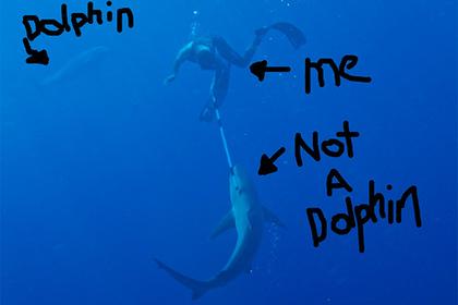 Телеведущий избил акулу и разрушил миф о дельфинах