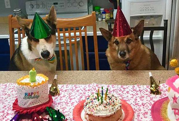 Собачья вечеринка