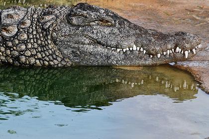 Мужчина одолел четырехметрового крокодила и отбил сына
