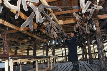 В России запретят добавлять в алкоголь оленьи рога