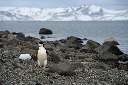 Российские школьники смогут попасть на Южный полюс
