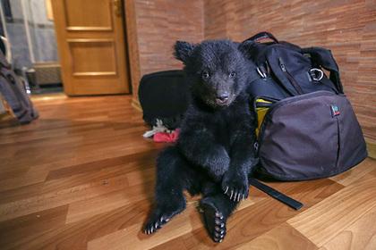 Россиянам запретят держать хищников в квартирах