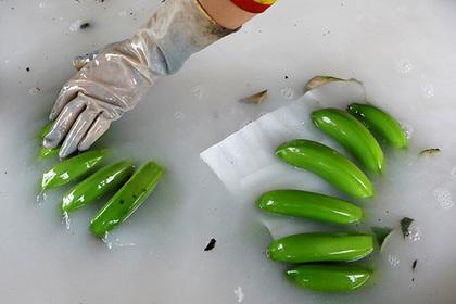 Школьники принялись насмехаться над радиоактивными бананами