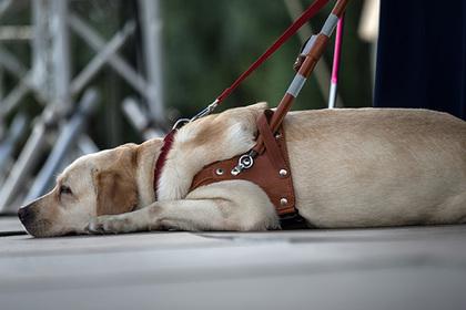 Инвалида не пустили в кафе из-за собаки-поводыря