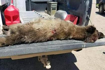 Мертвый загадочный зверь запутал зоологов
