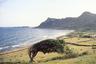 На райском острове даже стихия создает шедевры. Любимое дерево Жака Золти на берегу бухты Гран-Фонд, принявшее необычную форму после урагана «Луи», 1988 год.