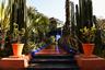В настоящее время в саду Мажорель произрастают около 350 видов растений и цветов, привезенных с пяти континентов. Здесь есть целая коллекция кактусов, пальмы, бамбук, папоротники из Латинской Америки и Океании.